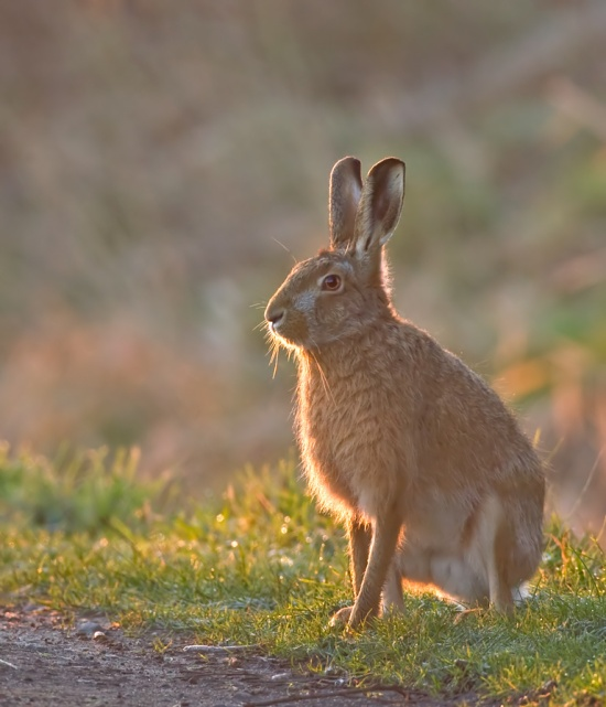Echoes from Emptiness - Hare on full alert