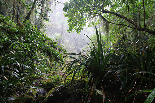 Kiels Mountain rainforest hermitage