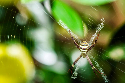 Echoes from Emptiness: St Andrews Cross Spider from www.thisisaustralia.com.au